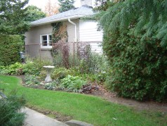 Mature trees and perennial garden in backyard