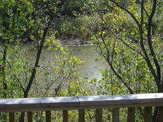 Oversized very private lot backing onto woods and creek of the Thames