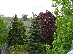 "Wonderful view of ""Warbler Woods"" from the sundeck"