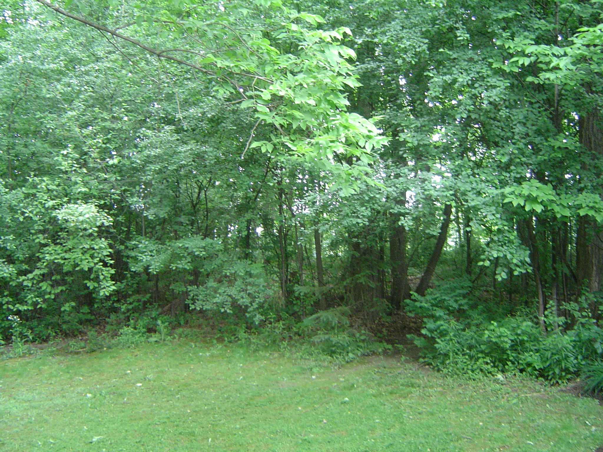 Woodland at the side and rear of property
